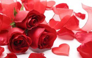 des roses et des pétales